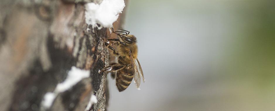 Μελισσοκομική ζυγαριά